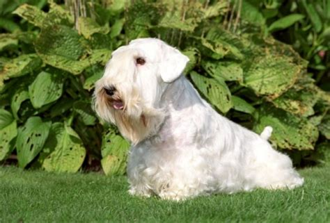 puppies for sale in ny state maltese puppies for sale in new york state and dogs breeds picture