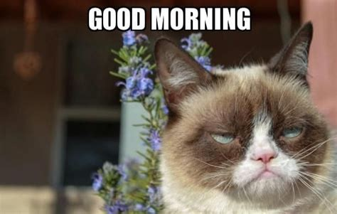 Good Cat Meme - group of good morning meme slapcaption com we heart
