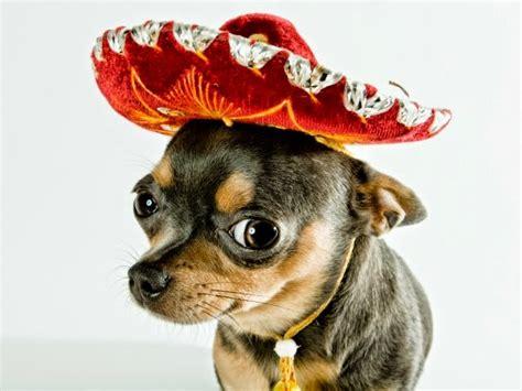 imagenes chidas mexicanas chistes cortos mexicanos blog mis chistes