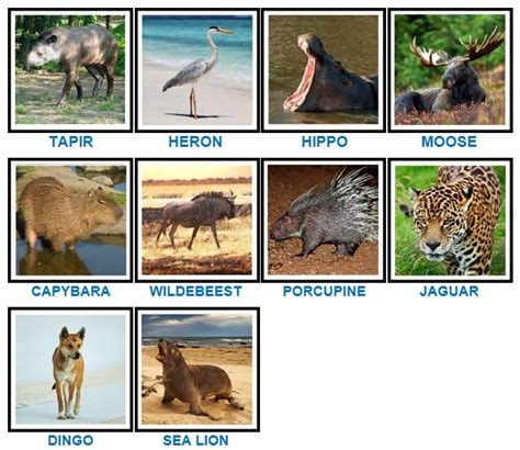 pics animal cheats game solver word