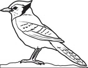 blue bird colouring pages blue coloring page