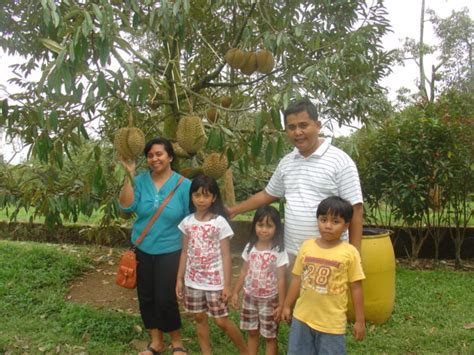 Bibit Buah Naga Sukabumi 2010 ke bogor warso farm ronarata