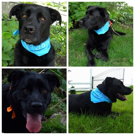 paws dogs for adoption pound paws courtesy post finnegan available for adoption mel s