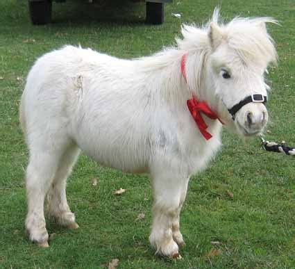 mini pony are difference classes for mini and mini pony