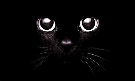 wallpaper cute dark cute black cat wallpaper hd wallpapers gallery