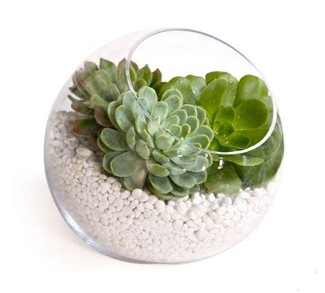 Succulent Vase by 3 Simple Diy Wedding Centerpieces Succulents