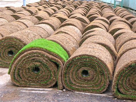 concimazione tappeto erboso posa tappeti erbosi vicenza trifolium giardini vicenza