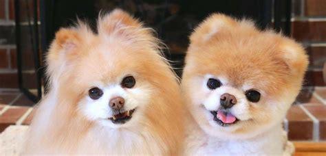 los gatos m 225 s famosos de los hay madre mia perros famosos los perros m 225 s famosos de las redes sociales mundotkm