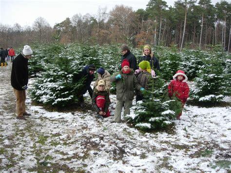 weihnachtsbaum selber schlagen nähe bonn weihnachtsb 228 ume selber schlagen www ruhrpottkids