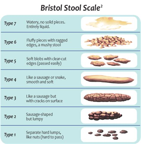 bristol stool scale pdf related keywords bristol stool
