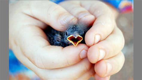 Obat Herbal Sesak Nafas Pada Burung mengatasi burung sesak nafas dan gejala sakit lainnya