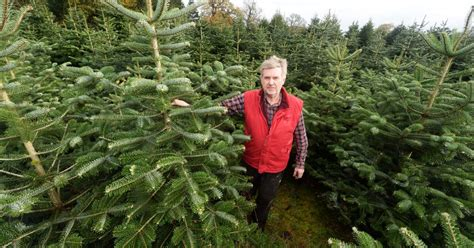 best places to buy a christmas tree near birmingham
