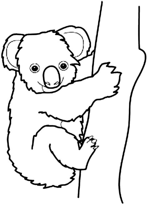printable coloring pages koala koala coloring pages clipart best