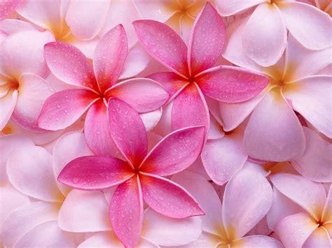 imagenes de flores bonitas fondos de hermosas flores fondos de pantalla de hermosas