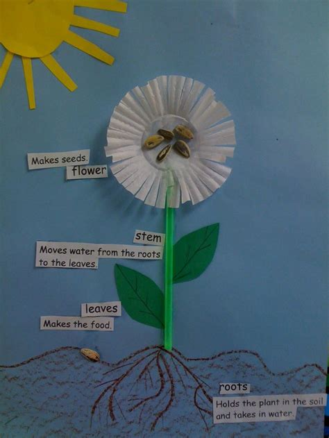 plant crafts for parts of a plant science ideas plant