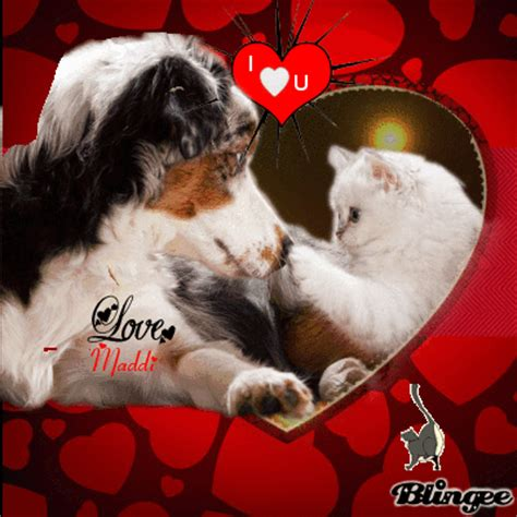 puppy i you i you puppy and kitten by maddi picture 127897938 blingee