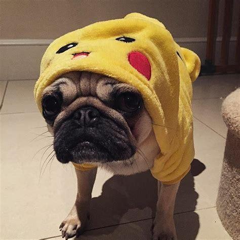 pug pikachu dantdm this is dantdm tdm pikachu pikapug pugs danandphil by