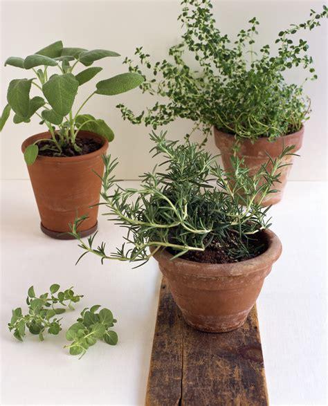 remove gnats  potting soil home guides sf gate