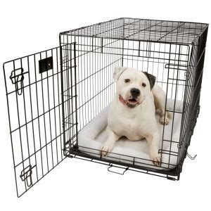 puppy crate tips midwest stages and travel crates 1600 series web exclusive sale