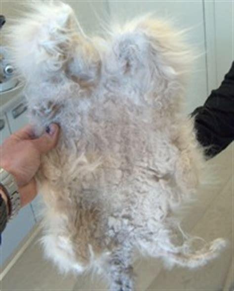 cat hair caretips
