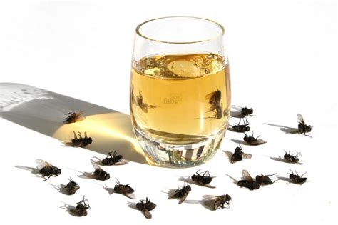 how to get rid of flies in the house how to get rid of flies quickly inside and outside
