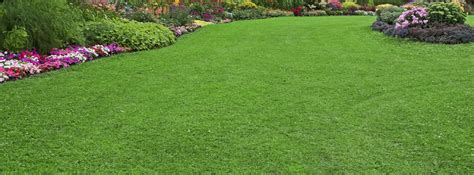 lawn fertilization st louis mo fertilizing lawn