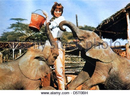 elsa martinelli hatari hatari 1962 elsa martinelli stock photo royalty free