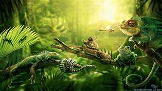 40 Wide Bookcase 696969 Hd Widescreen Amazon Jungle Images Wallpapers For