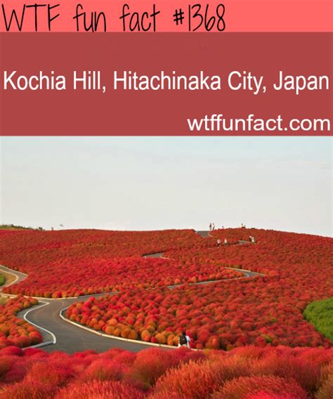 kochia hill hitachinaka city japan places to
