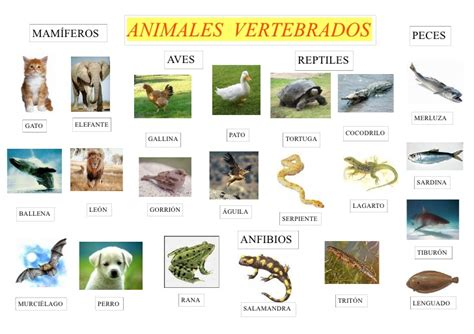 imagenes animales invertebrados 10 animales vertebrados imagui
