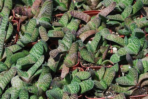 top 28 do succulents need sun vignette design