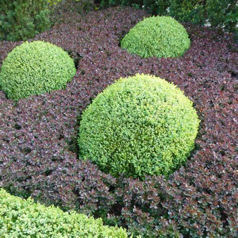Buchsbaum In Form Schneiden 2025 by Buchsbaum Schneiden Und In Form Bringen Gartentr 228 Ume