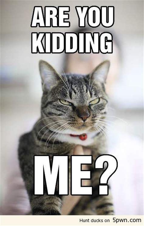 Are You Kidding Me Meme - pin are you kidding me meme on pinterest