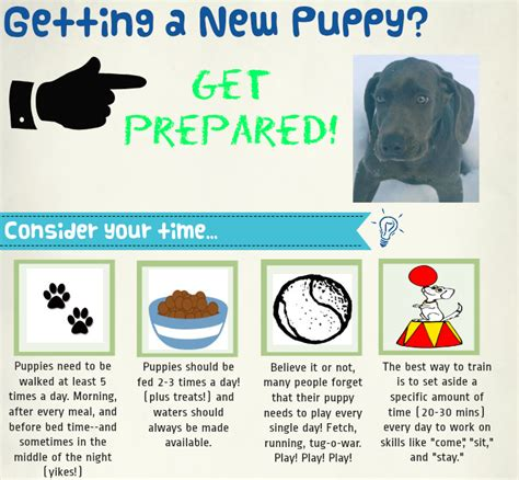 new puppy supplies list new puppy shopping list for zephyr my new puppy