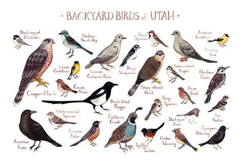 utah backyard birds field guide art print watercolor