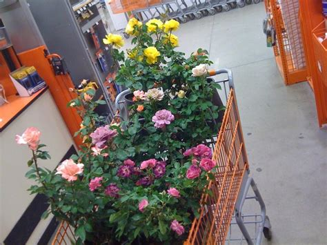 home depot coupons home depot coupons garden org