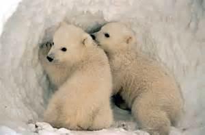 Is a polar bear skin what do polar bears eat where do polar bears live