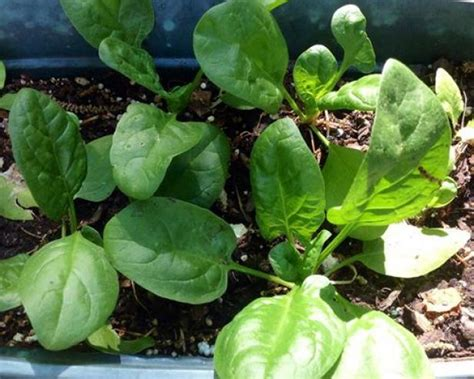 garden salad ideas grow a salad garden hgtv