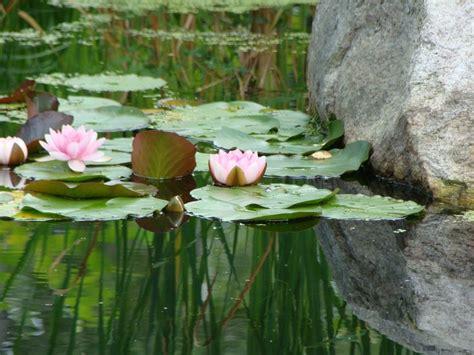 Bar Harbor Botanical Gardens by Botanical Gardens In Boothbay Maine Maine