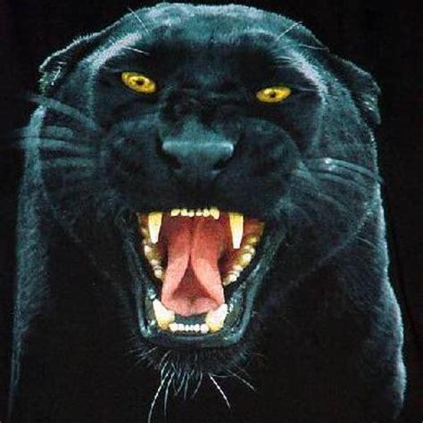 Panther Teeth