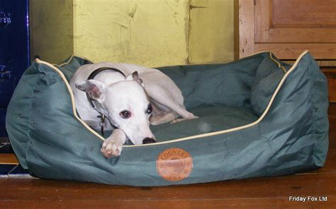 horse blankets for beds dog beds friday fox witney horse blankets and dog coats