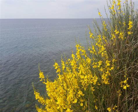 fiore inizia con la a fiori iniziano con la e sepa with fiori iniziano