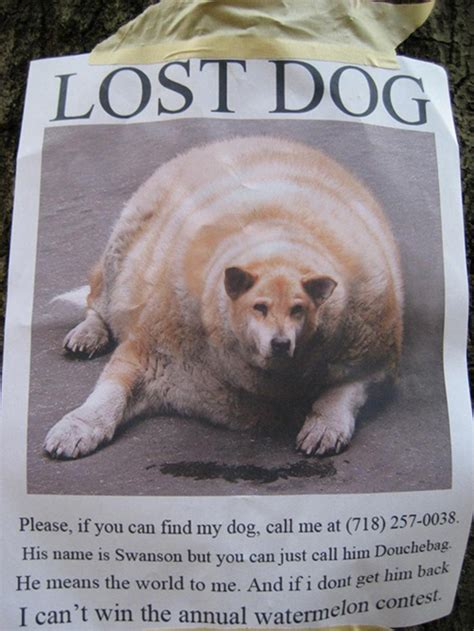 Lost Doge Meme - 20 funny lost pet signs