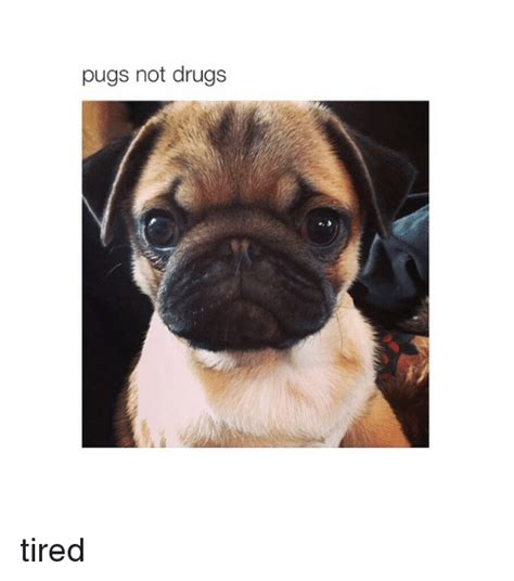 tired pug 25 best memes about pugs pugs memes