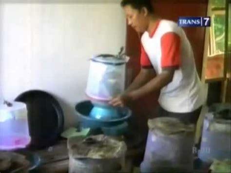 Bibit Belut Jawa Timur budidaya kroto hasilkan pundi pundi rupiah di jombang