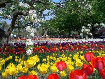 britzer garten eingang massiner weg tulipan im britzer garten