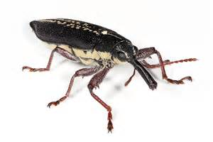 insect endangered animals facts wildlife pictures and
