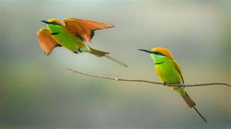 bee eater wallpapers first hd wallpapers green bee eater wallpaper wallpaper studio 10 tens of