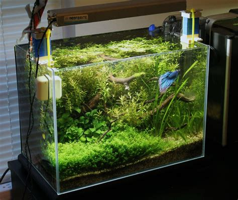 aquascape betta betta house betta aquariums and betta fish