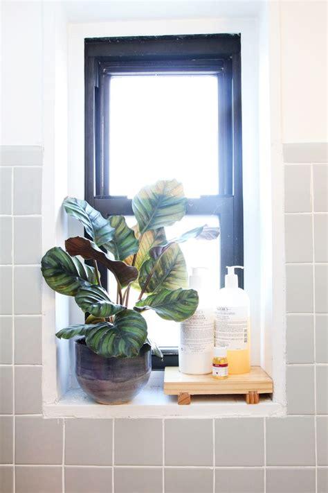 plants for bathroom with no windows the 25 best shower window ideas on pinterest window in